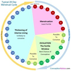 Menstrual Cycle Diagram With Ovulation Light Wiring For Golf Cart If You Have Sex On The 3rd Day Of And My Egg Was Released Source Calendar Phases Conception Advice