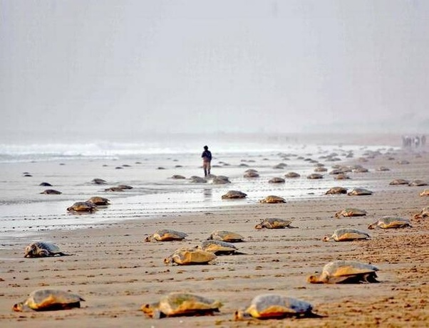 Which is the best sea beach in Chennai  Quora