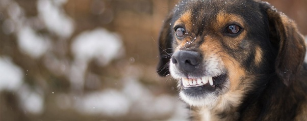 Why does my dog shake his mouth? - Quora