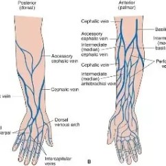 Veins In The Foot Diagram Jl Audio Wiring Diagrams Where Can I Find To Shoot Dope Quora Basilic Vein On Left Bottom Is A Common Junkie After Crook Your Elbow No Longer An Option Obviously And