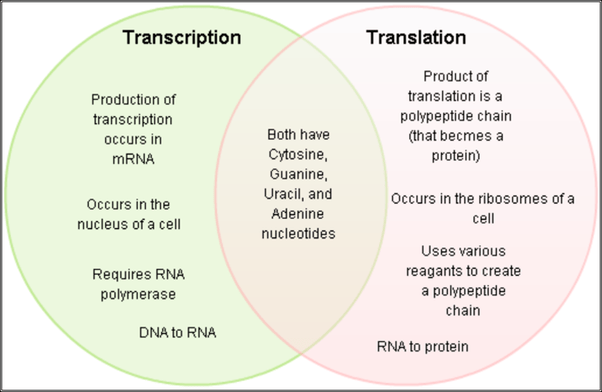 venn diagram comparing dna and rna winnebago wiring diagrams how is replication different from transcription quora translation comparison snagged creately com page v