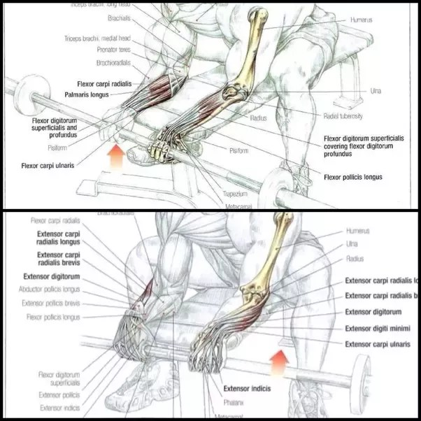 pull up muscles worked diagram wiring lights in series what s the best way to start doing ups quora of failure you can work directly on grip strength several ways most common are seated wrist curls reverse