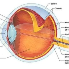 Parts Of The Eye Diagram And Function 2000 Subaru Outback Engine How Many Are In A Human Quora Cornea Is Outermost Layer Primarily Responsible For Focusing Light That Comes Into Our Eyes