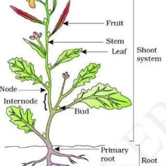 Parts Of A Flower Diagram Electric Relay Wiring And Plant All Data How Many Are There On Plants Quora Label