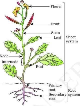 parts of a flower diagram qualcast classic 35s and plant wiring all data how many are there on plants quora label