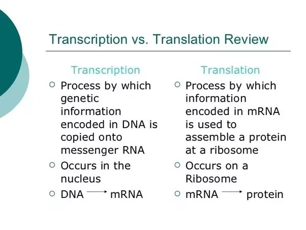venn diagram comparing dna and rna 4 lamp t5 ballast wiring what are the major differences between transcription translation just go through it in a simple way