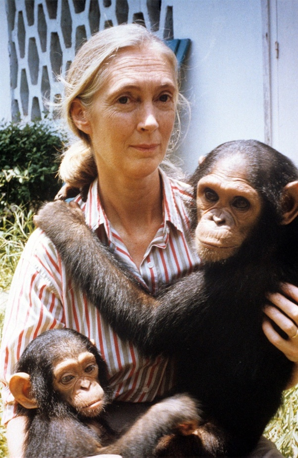 friends with a chimpanzee troop