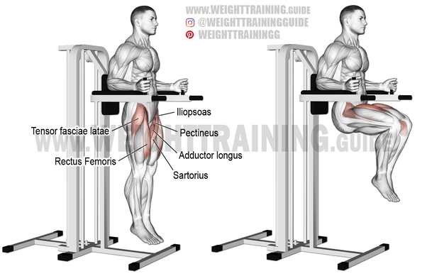 captains chair gym machine office qld what is the best workout for abs quora captain s basically a hanging leg knee raise pictured below rectus abdominus lower and upper ones that contribute