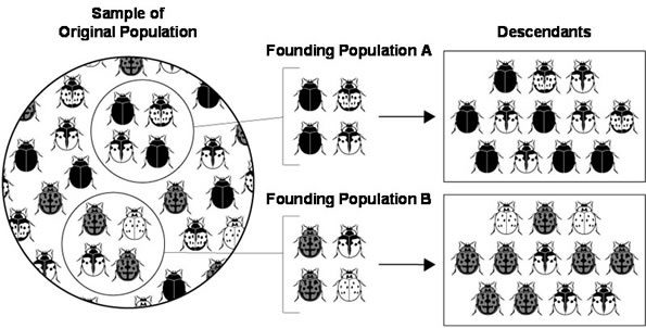 How can the genetic drift caused by a population