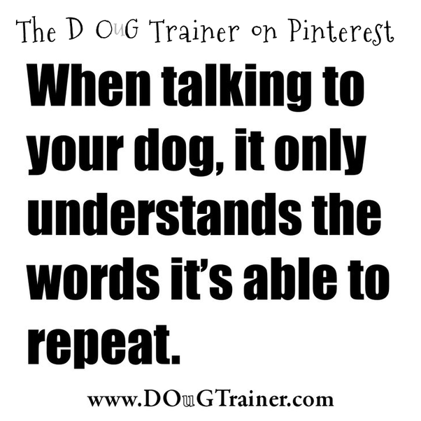 Can an adult dog understand a different language is being