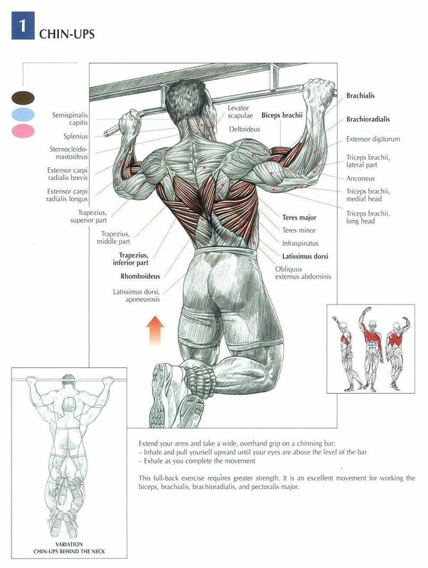 What are the similar and different muscle groups involved