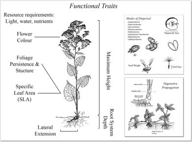 What are functional trait-based approaches to plant