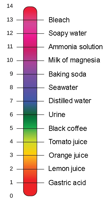 What Is worse a low or high PH? - Quora