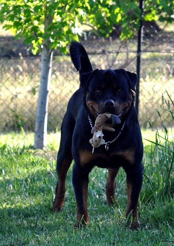 Grabbing Dog By Scruff : grabbing, scruff, Should, Picking, Scruff, Their, Neck?, Quora