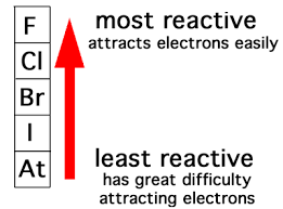 Which is the most active element in the periodic table