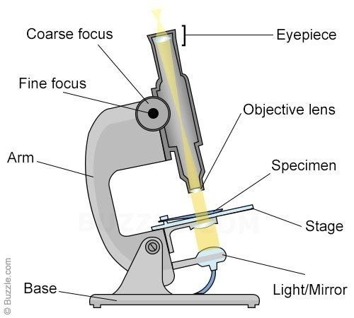 glass eye diagram parts ac motor circuit wiring diagrams what do you mean by objective and eyepiece lens in a microscope? - quora