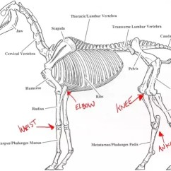 Horse Skeleton Diagram Labeled 2002 Ford Escape Fuel Pump Wiring Why Do Some Animals Have Forward Facing Front Knees Like Horses Cows Here S The Cow Which Is Similar To So No Need Mark Anything