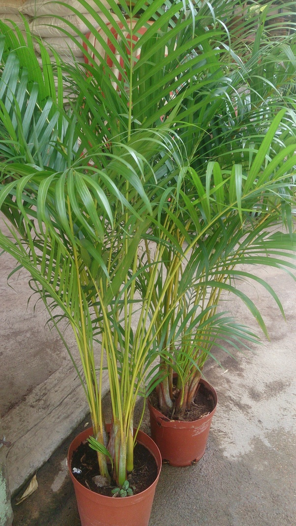 What indoor plant produces the most oxygen  Quora