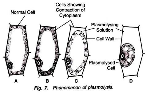 What will happen when a plant cell is kept in hypotonic