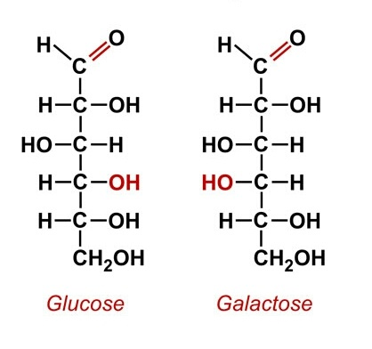 What is the difference between alpha d glucose and