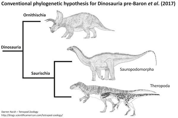 For evolutionary biologists, why is there little agreement
