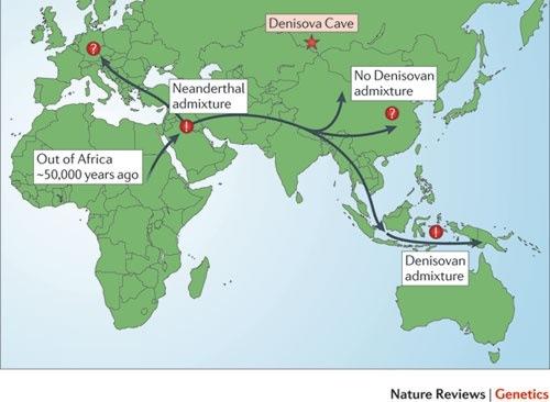 Denisovans Vs Neanderthals