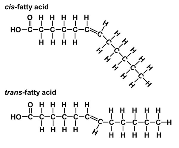 Why do cis-unsaturated fatty acids have low melting points