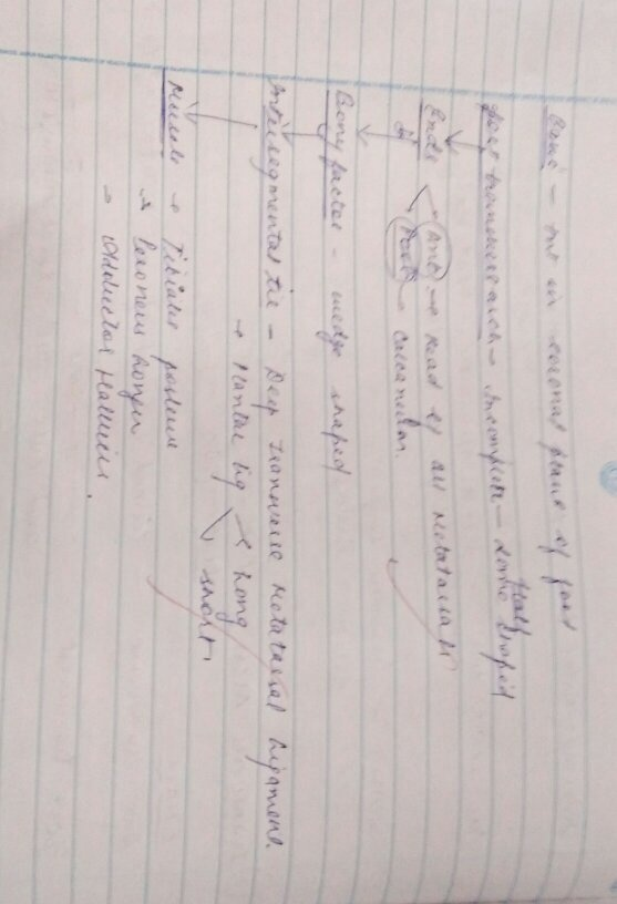 What do professors expect in a answer sheet of mbbs first