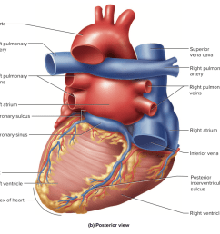 because most of the left atrium is hidden behind the heart from an anterior view looking at the heart from behind gives a much different impression  [ 1172 x 1104 Pixel ]