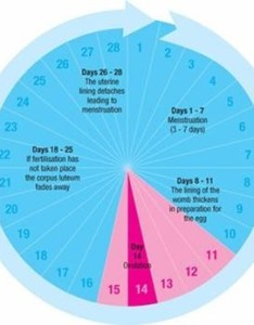 If your mentrual cycle is days you can see which could become pregnant are fertile the pink and red in also it possible for  woman to five after her rh quora
