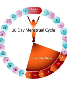 During your period an egg is usually developing ready for release mid cycle the time it takes to mature within ovary can vary also how many days after are you most fertile quora rh