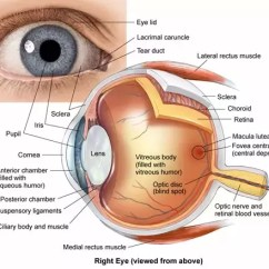 Human Eye Diagram Blind Spot Duncan Designed Wiring Diagrams Why Do We Have A In The Center Of Our Vision Quora Phenomenon Is Entirely Physiological But Brains Adapted To This Minor Hindrance Fortunately And Tends Fill Visual Information For