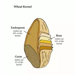 Grain Kernel Diagram Dpst Rocker Switch Wiring Of Wheat Data Today