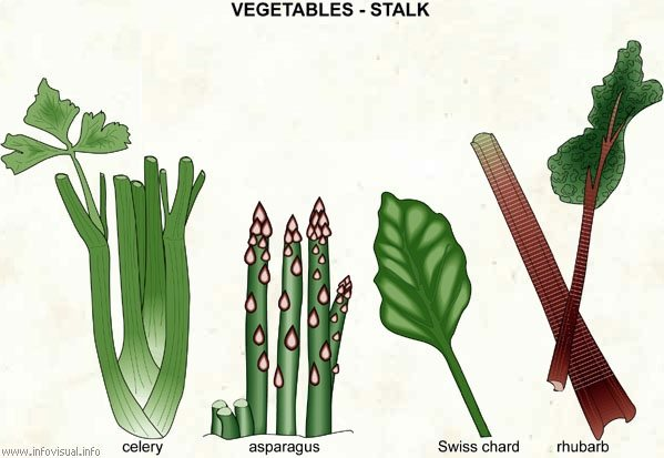 Leaves Root Plants Draw Seed Parts Edible And Fruit Picture Flower Stems 4