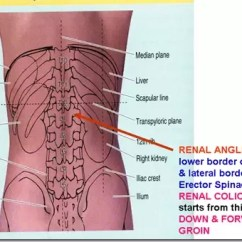 Diagram Of Where Kidneys Are Solar Street Light The Situated In Body Quora Located To Back Fat Front Lumbar Muscles Upper Half Covered By Two Lowest Ribs