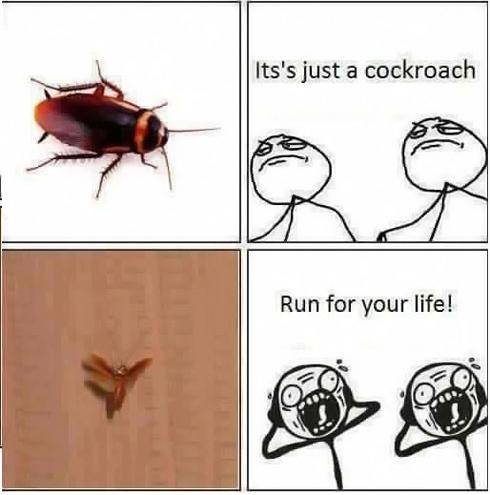 Why do people hate cockroaches? - Quora