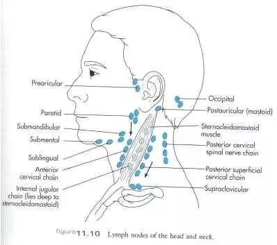 where are my lymph nodes diagram mgf radio wiring is it normal to feel in the neck they soft and here a of head which you refer