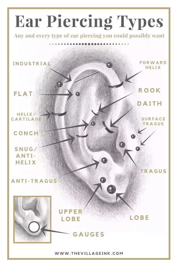 cartilage piercing diagram vintage strat wiring what is this type of called quora i believe it s an orbital or helix basically like extra large ring that extend into the snug anti area