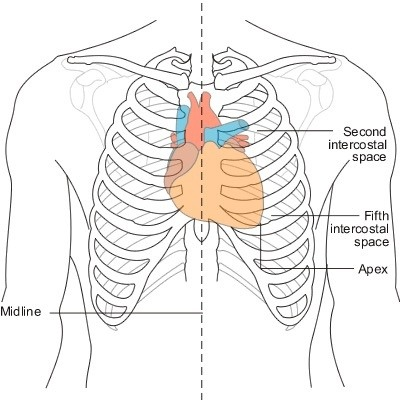 12 lead ekg placement diagram brain frontal view why is cardiac pain usually in the center of chest and not left side? - quora