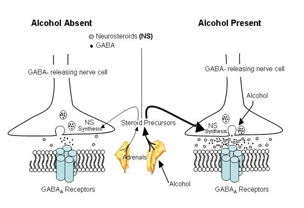 What is the chemistry of alcoholic beverages? What happens