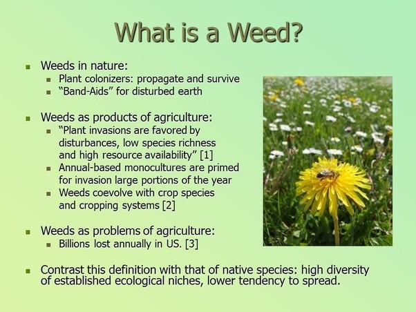 Do 'weeds In Gardens' Plants That Grow On Their Own Have