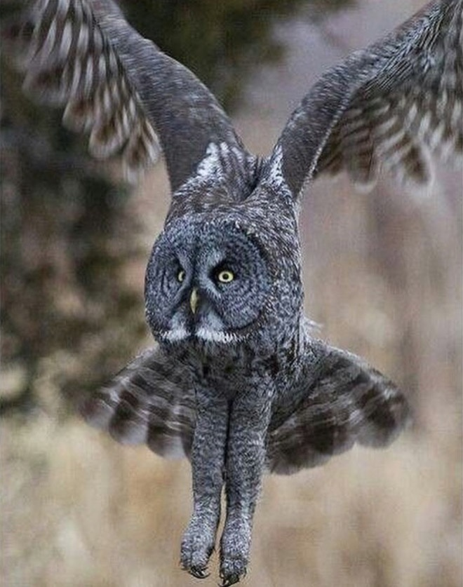 In case you didn't know, owls have long legs and now we