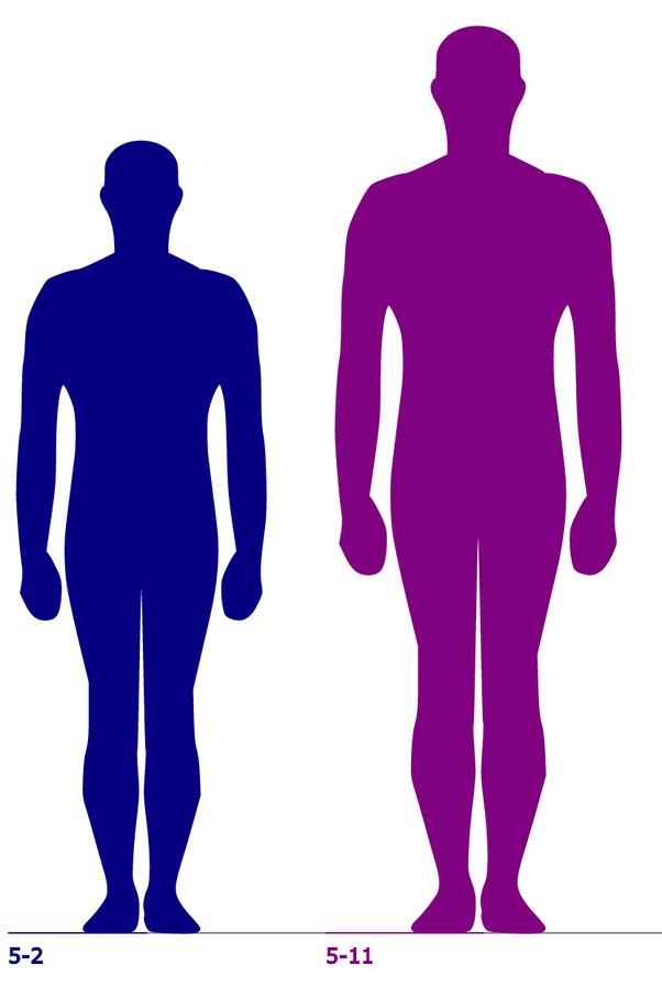 Height Comparsion : height, comparsion, Compared, 5'11?, Quora