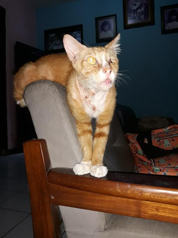 Perilaku Kucing Setelah Melahirkan : perilaku, kucing, setelah, melahirkan, Penyebab, Induk, Kucing, Tidak, Menyusui, Anaknya, Setelah, Melahirkan?, Quora