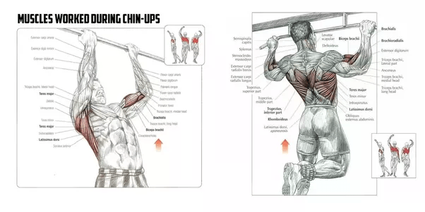Are there any bicep, chest and shoulder workouts for the