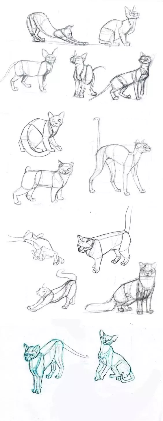 Cat Drawing Anime : drawing, anime, Someone, Teach, Anime, Step?, Quora