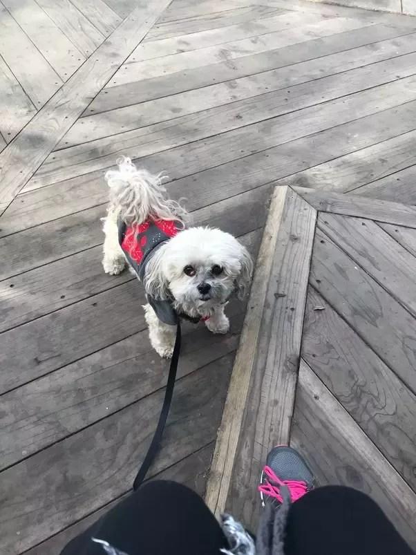Grabbing Dog By Scruff : grabbing, scruff, Behind, Purebred,, Won't, Quora