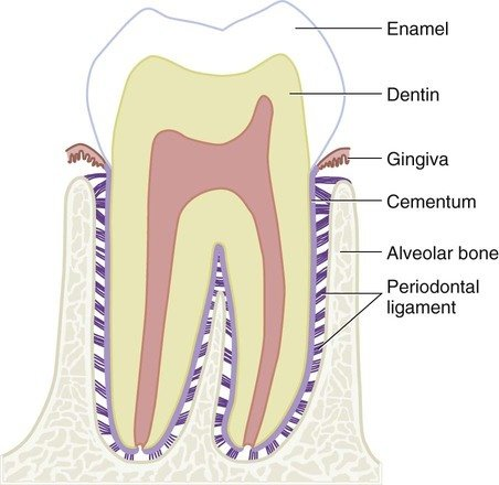 Can I wear braces over root canal treated teeth  Quora