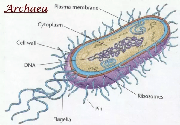 plant cell diagram animal simple drawing dometic 3 wire thermostat wiring what are some examples of prokaryotic and eukaryotic cells? - quora