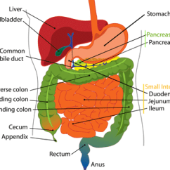 Where Are Your Appendix Located Diagram Grow Room Designs With Pictures And Is The Quora Sits At Junction Of Small Intestine Large It S A Thin Tube About Four Inches Long Normally In